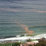 Red tide hits False Bay