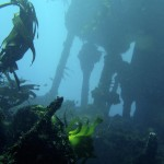 Dive the SS Maori with Cape Scuba Club