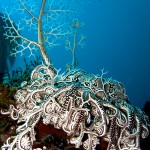 Dive Star Walls reef with Cape Scuba Club
