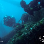 Dive the MV Aster with Cape Scuba Club