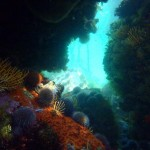 Dive Seaforth Beach with Cape Scuba Club